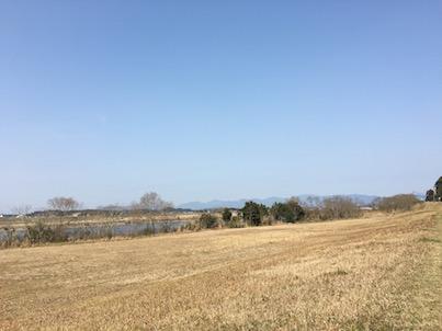 宮崎県大淀川で見た!コシジロヤマドリ(腰白山鳥)の2羽