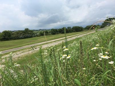 梅雨時期の大淀川の河川敷と花たち