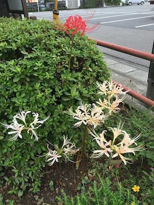 宮崎の彼岸花とてんとう虫と初秋の花たち