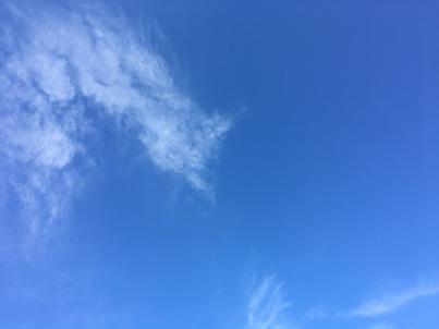 宮崎文化公園と青空とストレリチア