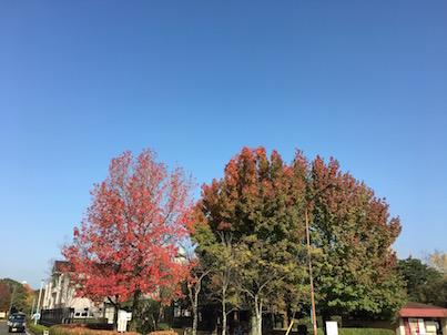 春日公園の紅葉が進んでいます。