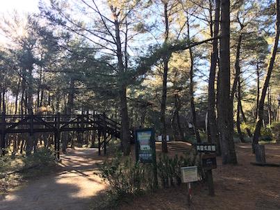 宮崎市の松林の中の英国式庭園に行きました。