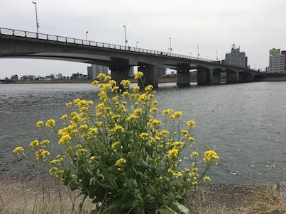 英会話クラブと大淀川