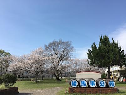 綾町の馬事公苑の桜並木と馬と花時計
