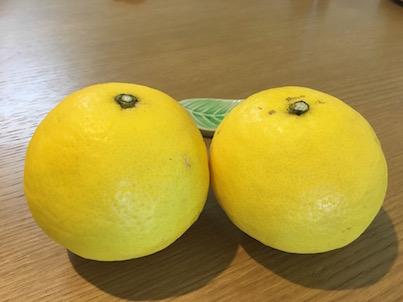 日向夏という柑橘系みかんが美味しい