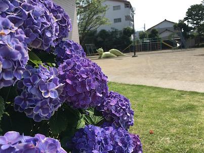 宮崎市のリスの公園と紫陽花の花