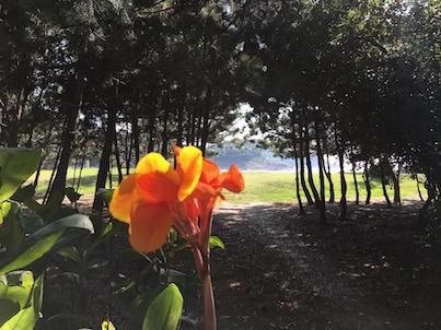 8月終わりの伊勢ケ浜の風景
