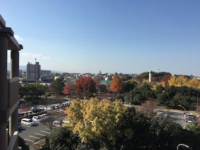 春日市の春日公園の紅葉風景とカワセミ