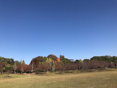 2018年11月の福岡県春日公園の紅葉風景