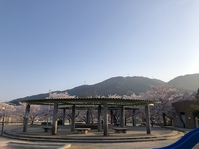 福岡市早良区の内野中央公園の桜も満開&唐津へのドライブ2019年4月6日