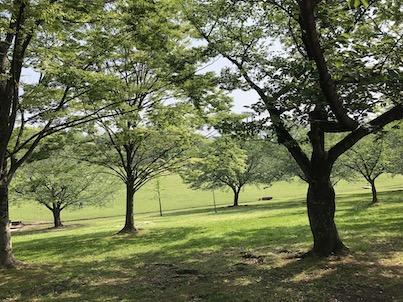 新緑の季節!プラタナスの木など春日公園2019年5月