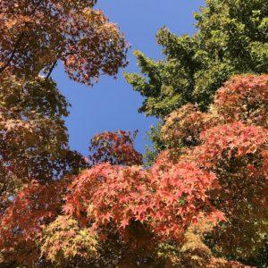 福岡県春日公園の紅葉がキレイ!2019年11月17日